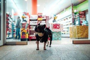 Tendência do mercado Pet: produtos combinando pra pet e tutor
