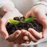 Semana do meio ambiente: deixe sua loja no clima